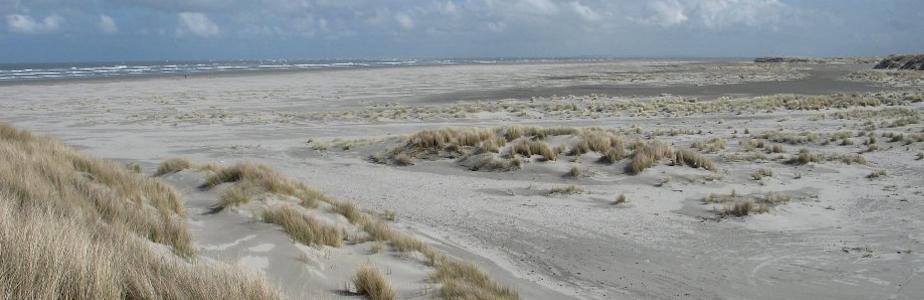 Ameland-Strand_dun